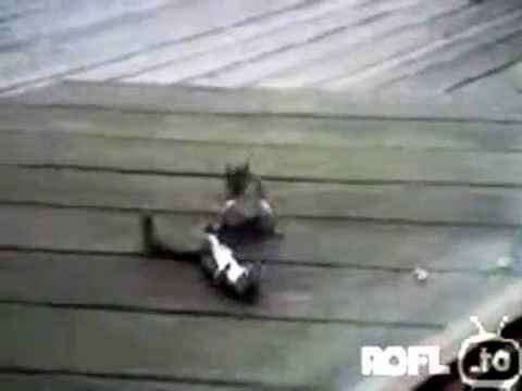 Two squirrels fighting  Funniest Squirrel Video EVER