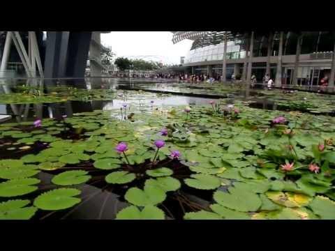 ARTSCIENCE MUSEUM SINGAPORE -  PRECIOSAS VISTAS