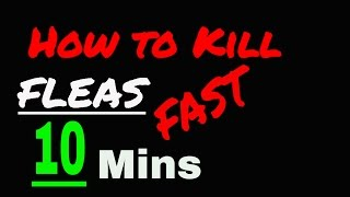 How To Get Rid Of Fleas In 10 Mins For Cheap