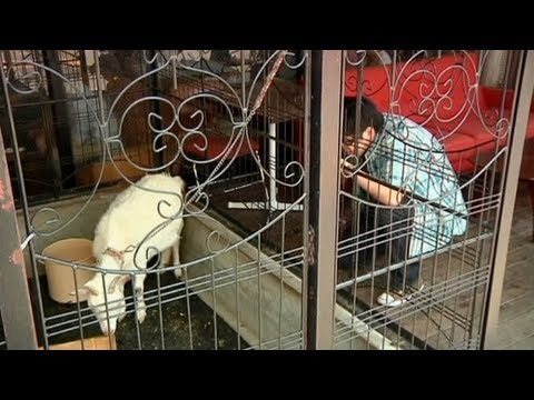 Tokyo cafe employs goats to add 'wow factor'