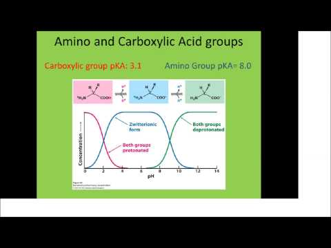 How do you determine the net charge of an amino acid?