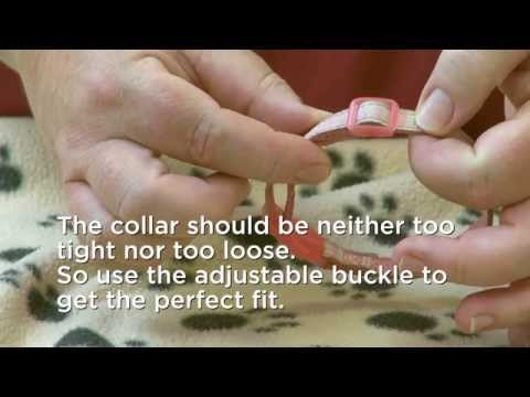 How to fit a collar for your cat