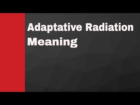 Adaptive Radiation Meaning
