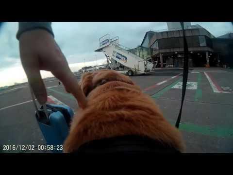 Guide Dog Hudson's First Flight