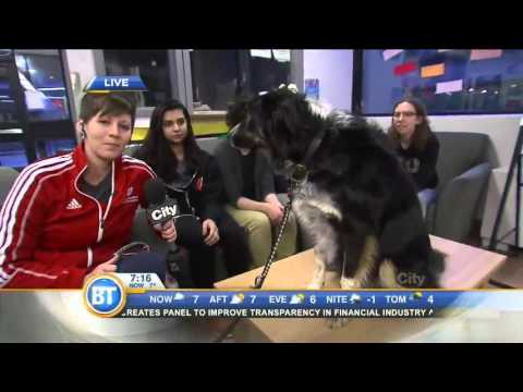 Relieving stress with a therapy dog at York University