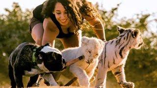 Lion, Tiger & Bulldog Buddies: Cute Animal Babies