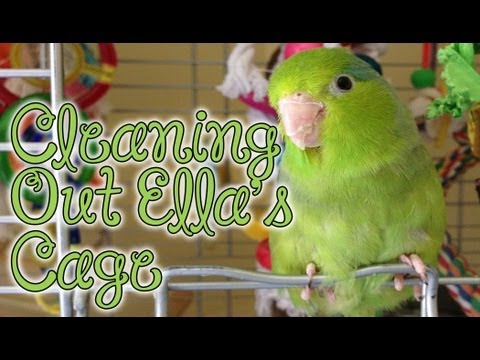 Cleaning Out My Parrotlet's Cage