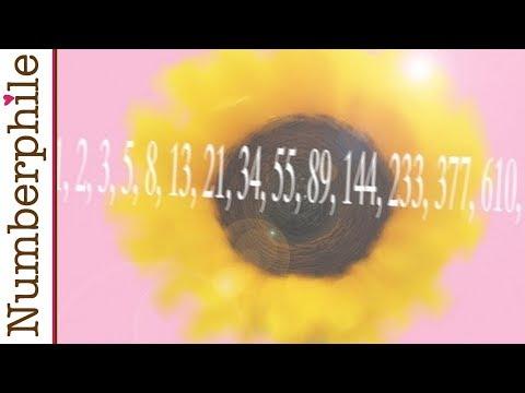 Sunflowers and Fibonacci - Numberphile