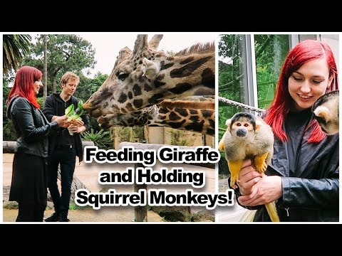 Feeding Giraffe and Holding Squirrel Monkeys | ITS MY BIRTHDAY!