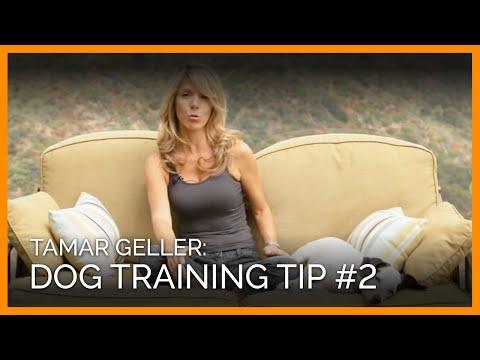 Tamar Geller Dog-Training Tip #2