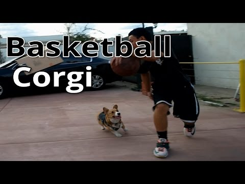 My dog playing Basketball (he can play some defense!)