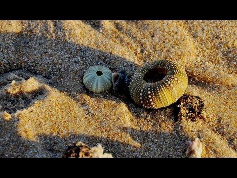Amazing Shell Beaches Around the World