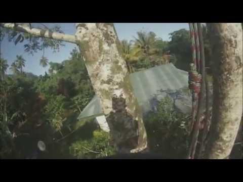Raiz' Arborist Pruning a Tahitian Mango Tree