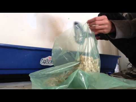How to clean your guinea pigs cage w/ bedding