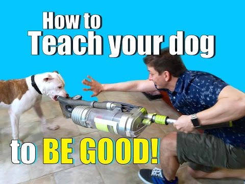 How to Get Your Dog to Listen to YOU Around ANYTHING - Even Vacuum Cleaners!
