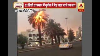 वायरल सच: क्या कुवैत में 62 डिग्री पहुंच गया है तापमान और जल गया पेड़?