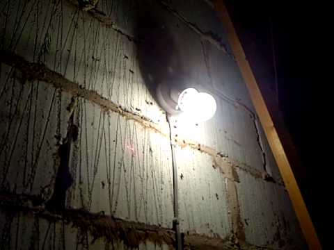 Cluster fly infestation in loft space.