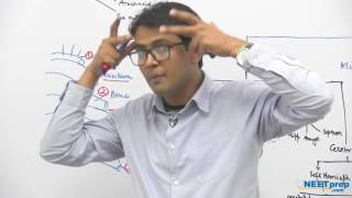 Central Nervous System - Dr. Rajeev Ranjan   NEET AIIMS   Video Lectures