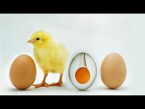 Photoshop Manipulation Tutorial 2016 | Transparent Egg Photoshop Effect