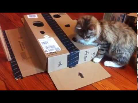 How to keep you cat busy for hours