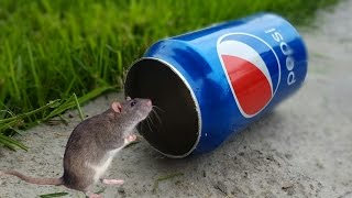 Best Mouse Trap Ever