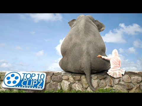 Top 10 Largest Animals on the Planet  - TOP 10 CLIPZ