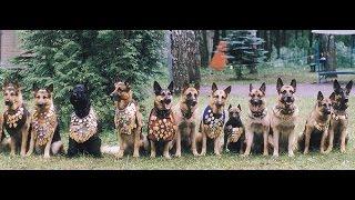 Собаки войны - необычное оружие.