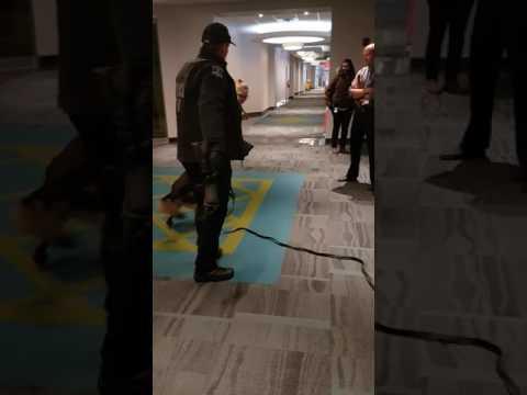 Police attack dog bites student - Halifax K9 Unit