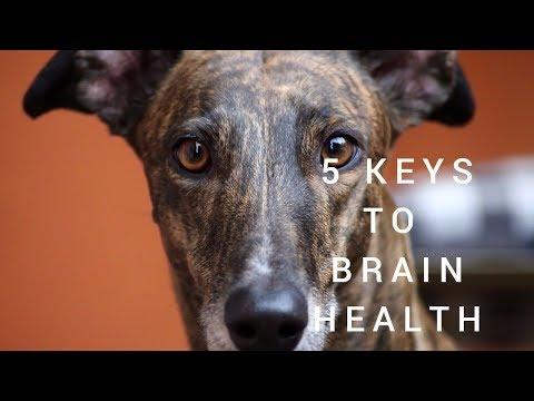 5 Keys For A Healthy Brain