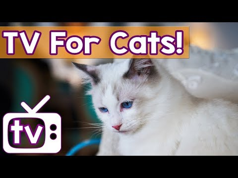 Cat TV: TV for Cats to Watch! Ducks and Geese in Water Entertainment to Combat Boredom in Cats!