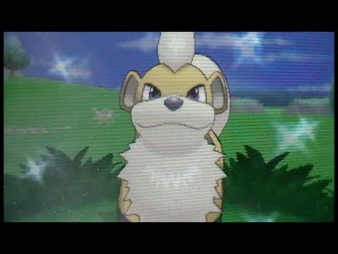Shiny Growlithe!! (LIVE!) After 431 RE's! Pokemon Y