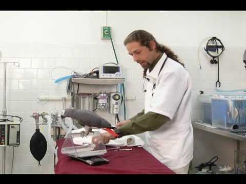 Pet Care's Dr. Poutous Shows How to Medicate a Pet Bird