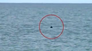 Nantasket Beach 9.17.2016 finned visitor