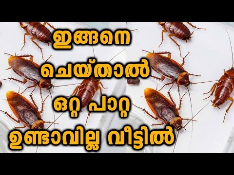 How To Kill And Get Rid Of Cockroaches | Oneindia Malayalam