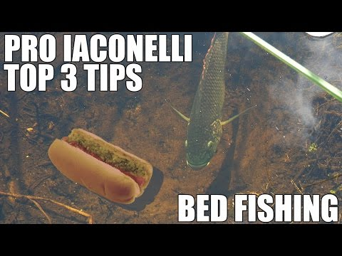Top 3 Best Bed Fishing Secret Bass Fishing Tips Video