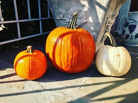 How to Protect Your Pumpkins from Squirrels and Other Animals