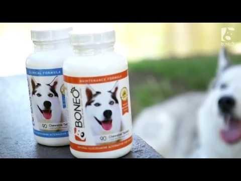Boneo Canine and Neo