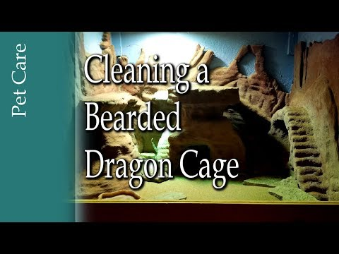 Cleaning Bearded Dragon Cage