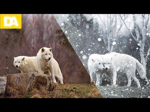 Photoshop Snow Effect Action