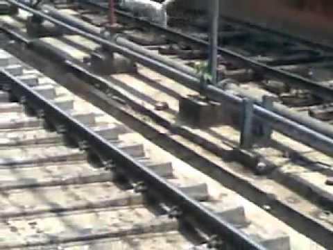 Dog cut the train