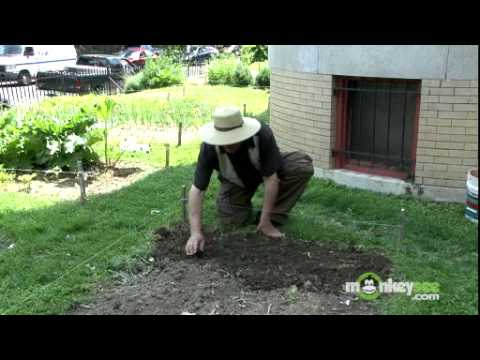 Vegetable Garden - How to Plant Seeds Outdoors