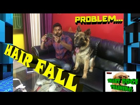 How to solve Dog Hair Fall PROBLEM in Hindi 2017 { dog training in hindi }