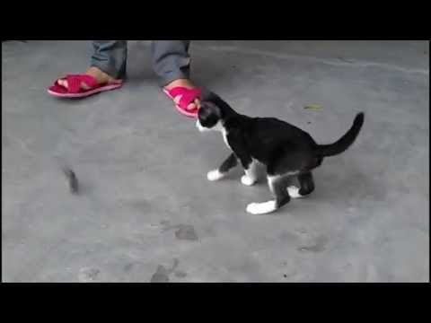How To Train Cat To Catch Mice ?