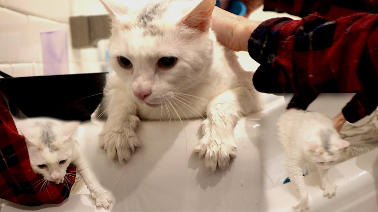 ATTEMPTING TO GIVE OUR CAT A BATH