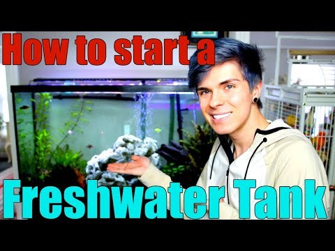 How to Start a Freshwater Aquarium | Everything You Need to Know