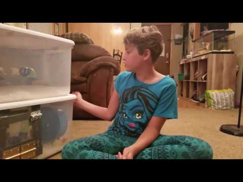 Lily's Syrian Hampster DIY Bin Cage Tour
