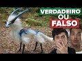 ANIMAL MISTERIOSO É ENCONTRADO NO NEPAL - VERDADEIRO OU FALSO??