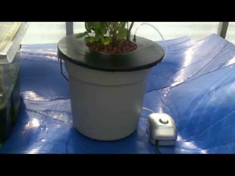 DWC Hydroponics Bucket System