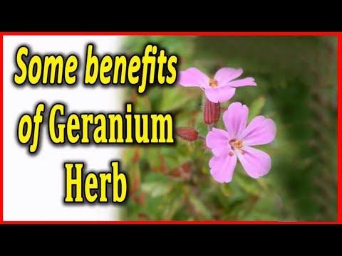 यह तेल बढ़ा सकता  हैं आप की खूबसूरती - Amazing Benefits Of Geranium