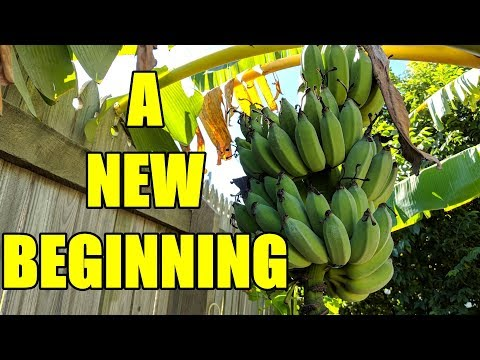 Aquaponic & Backyard Farm Update | The End is Near